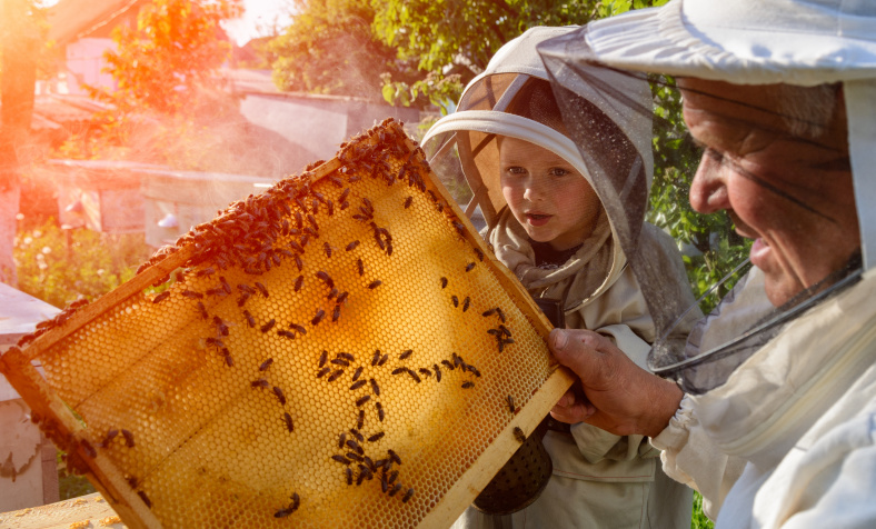 A Guide To Backyard Beekeeping