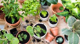 How to Create Your Own Edible Garden