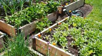 A Beginners Guide to Growing Your Own Edible Garden